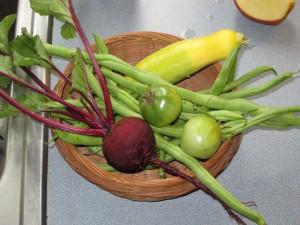Harvest 09112009