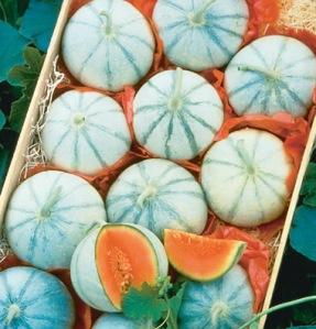 Johnny's Savor Melons