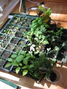 Maplewood Garden Club Plant Sale Booty