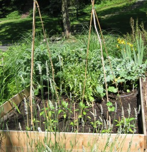 lettuce and spinach out, peppers and beans in