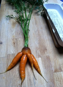 Multifurcated Carrot